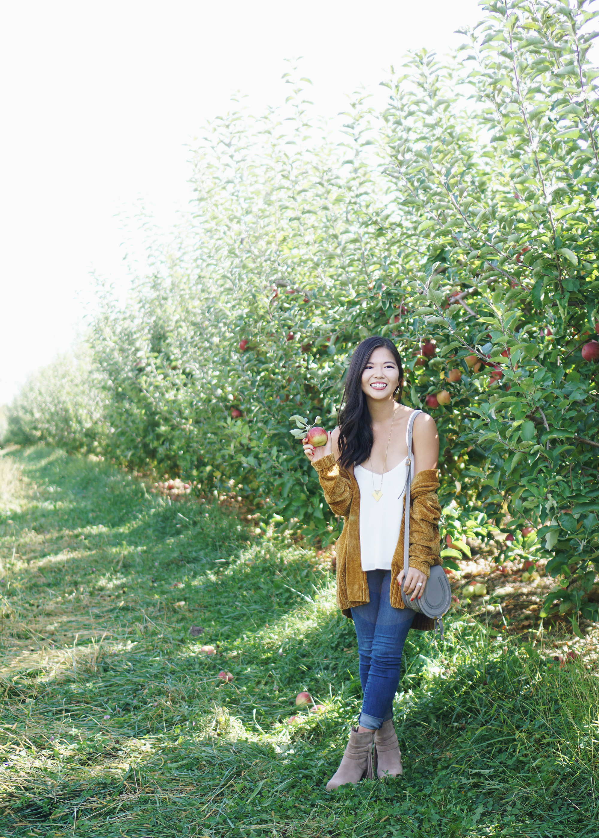 Apple Picking in New York